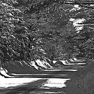 Country Road by Joanne  Bradley