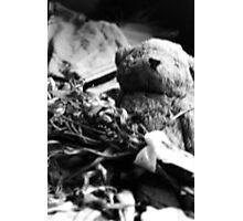Ragged old bear Photographic Print