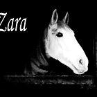 Beautiful Zara by tcdipswich