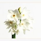 Paper White III by orchiddesign