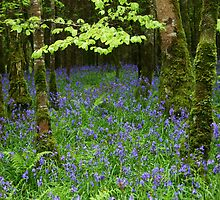 Bluebell Woods by Martina Fagan