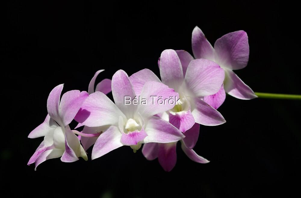 Sunlit Orchids by Béla Török