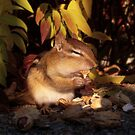 Chipmunk eating a peanut by TLWhite