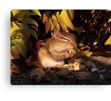 Chipmunk eating a peanut Canvas Print