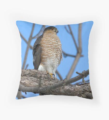 Sharp Shinned Hawk Throw Pillow