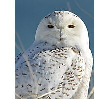 Snowy Owl Eyes Photographic Print