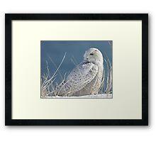 Snowy Owl in hiding Framed Print