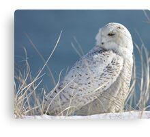 Snowy Owl in hiding Canvas Print
