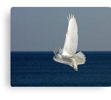 Snowy Owl in Flight #2 Canvas Print