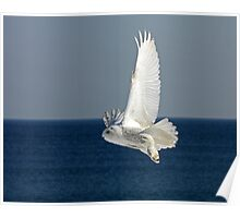 Snowy Owl in Flight #2 Poster