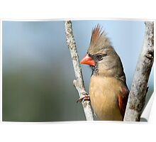 Lady Redbird Poster