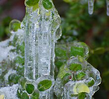 Frozen Green by LizzieMorrison