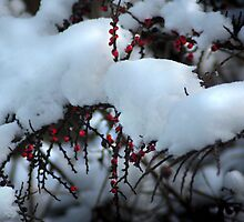 Winter Fruits by Ryan Green