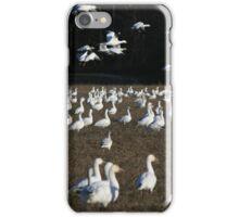 The snow goose x 1000 iPhone Case/Skin