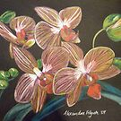 Pink Orchids by Alexandra Felgate
