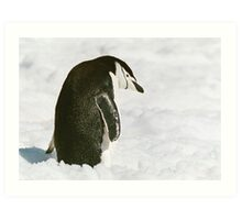 Chinstrap Penguin In The Snow Art Print