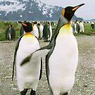 Pointing Penguin by Steve Bulford