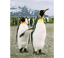 Pointing Penguin Photographic Print