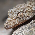 Southern Leaf-tailed Gecko by Andrew Trevor-Jones