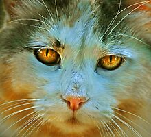 Jills Cat by diddle