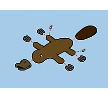 Platypus Diagram Photographic Print