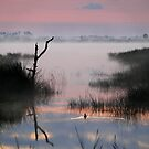 Lone Duck at Dawn by Charlie Sawyer