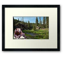1121-Bear Country Creek Framed Print