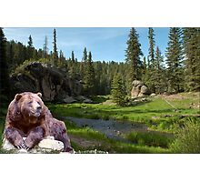 1121-Bear Country Creek Photographic Print