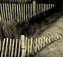 Fence by Tom Michael Thomas