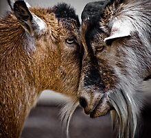 GoatsEye by photobaum
