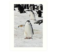 "Chinstrap Penguin  ~  ""Traffic Cop on Point Duty"" Art Print"