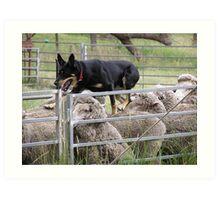 Sheep dog trials Taralga Rodeo 2009 Art Print