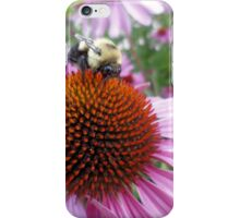 Buzzy Bee on Coneflower - 3 iPhone Case/Skin
