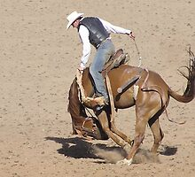Poley buckjump Taralga Rodeo 2009 by paulkoppe