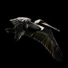 Fractal Pelican by Teresa Zieba