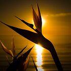 Paradise sunset by Arek Rainczuk