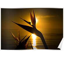 Paradise sunset Poster