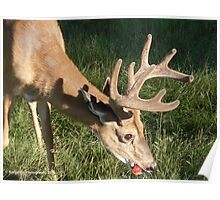 An Apple a Day Keeps the Doctor Away! - Amazing Buck Poster