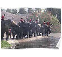 Thai Elephants Entertain. Poster