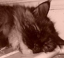 Tired Kitty in Sepia by karenuk1969