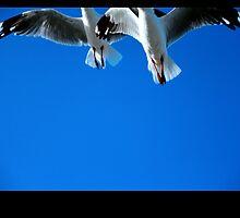Gulls by lukelorimer