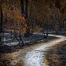 Devastation by Samantha Cole-Surjan