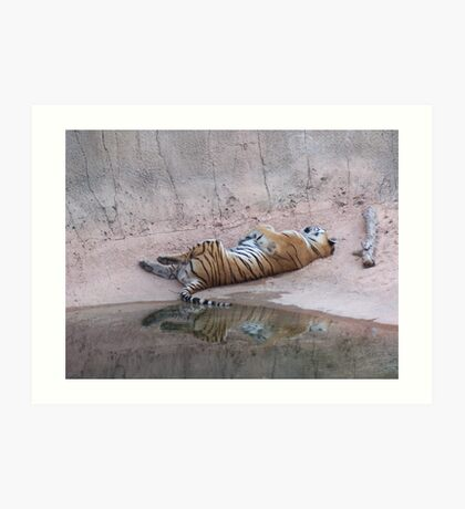Tiger Reflections Art Print