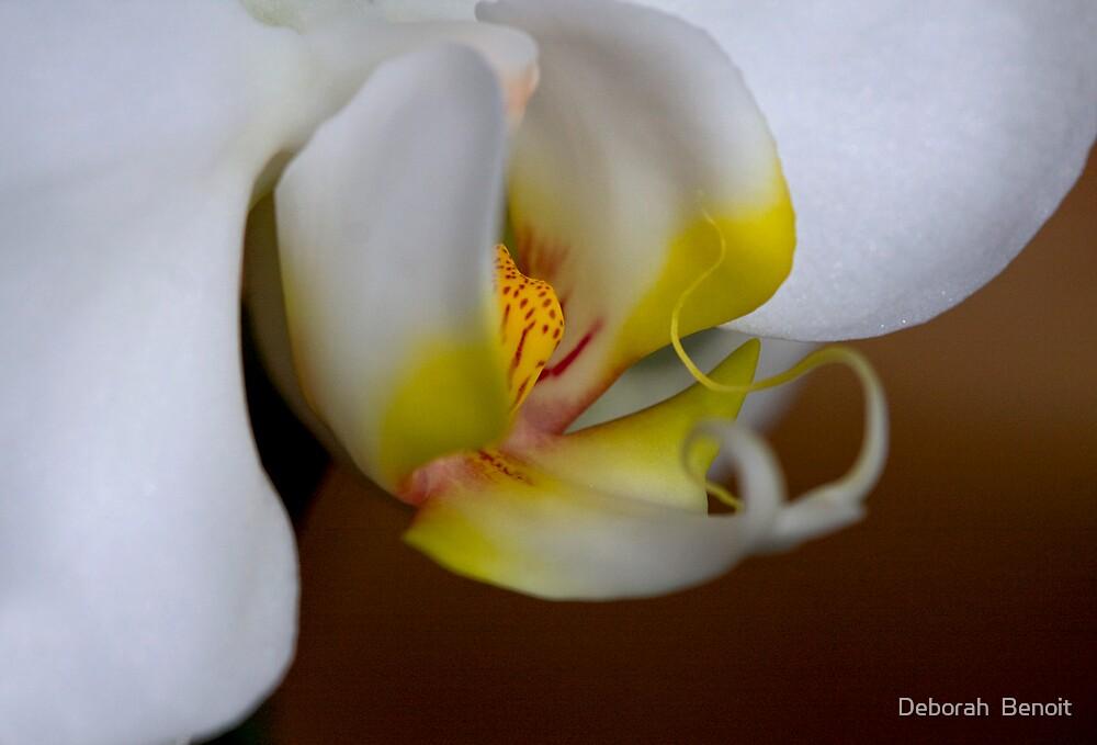 Inner Beauty by Deborah  Benoit