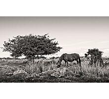 Roam Free Photographic Print