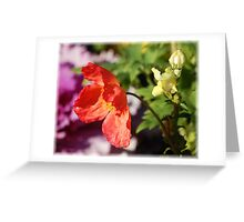 Gentle Fragility: Greeting Card