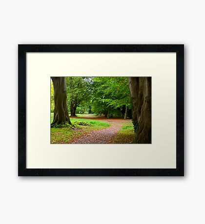 The Leafy Path Framed Print