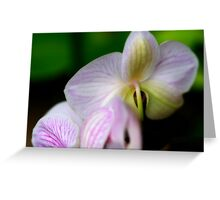 From Behind The Orchid Greeting Card