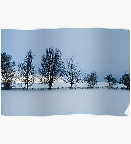 Row of trees Poster