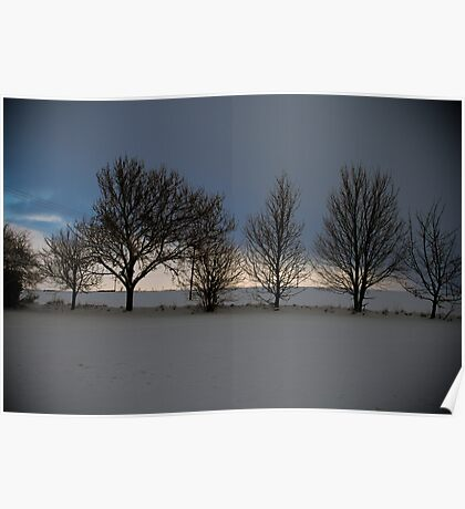 Row of trees 2 Poster